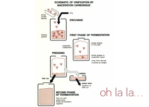 A schematic of carbonic maceration.  Photo courtesy of centralbottle.com