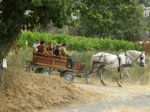 An old-time ride through the vineyards at the harvest festival in Séguret.  Photo by Diane Simmons-Tomczak