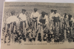 Another one of Bernard's postcards.  This is a pre-war champagne grape harvest.  Instead of in rows with posts and wires, the vines were staked on individual wooden posts and not necessarily in rows.