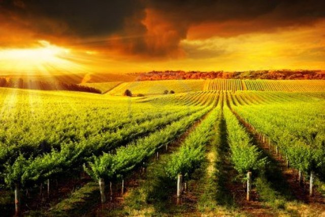 Sunset over the vines -- probably the first thing most wine lovers imagine when they dream of owning a winery.  The sunset is probably the only thing you won't have to buy.  (Photo from pixgood.com)